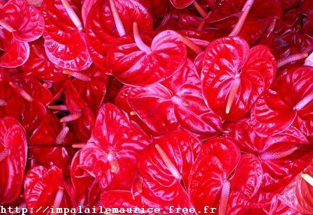Fleur Ile Maurice